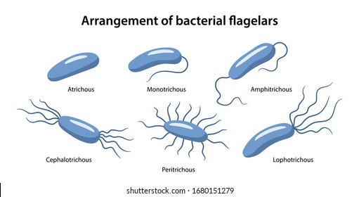 Flagella Images, Stock Photos & Vectors | Shutterstock