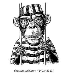 Arrested Monkey dressed in prisoner's robe holds the bars. Born to be free handwriting lettering. Vintage black engraving illustration