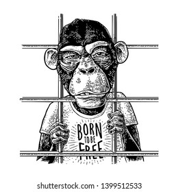 Arrested Monkey dressed in t-shirt. Born to be free handwriting lettering. Vintage black engraving illustration for poster.