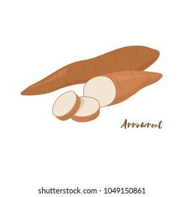 Arrowroot. Flat design. Vector illustration.