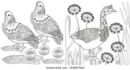 Art therapy coloring page. Coloring Book for adults. Colouring pictures with flowers and birds. Antistress freehand sketch drawing with doodle and zentangle elements.