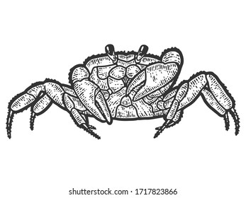Arthropoda crab. Sketch scratch board imitation. Black and white. Engraving vector illustration.