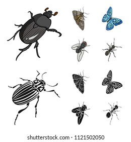 Arthropods insect beetle, moth, butterfly, fly. Insects set collection icons in cartoon,black style vector symbol stock isometric illustration web.