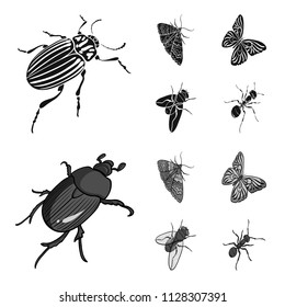 Arthropods insect beetle, moth, butterfly, fly. Insects set collection icons in black,monochrome style vector symbol stock isometric illustration web.
