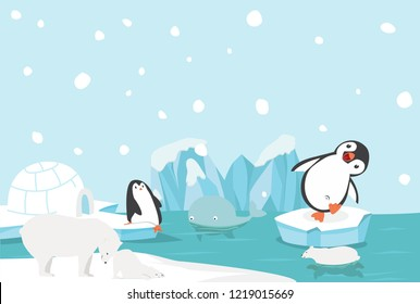 Artic animal North pole Arctic landscape