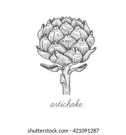Artichoke flower. Vector plant isolated on white background. Designed to create package of health and beauty natural products.