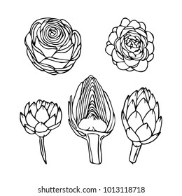 Artichoke vector illustration. Doodle style. Design, print, logo, decor, textile, paper.