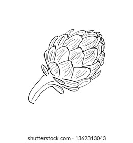 Artichoke vector sketch icon isolated on background with text. Hand drawn artichokes. For infographic, website or app