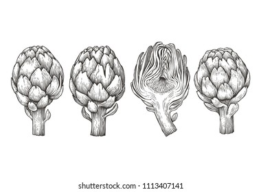 Artichokes. Hand drawn engraving style illustrations.