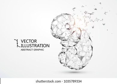 Artificial nurtured bionic fetuses, points and lines connected, vector illustration.