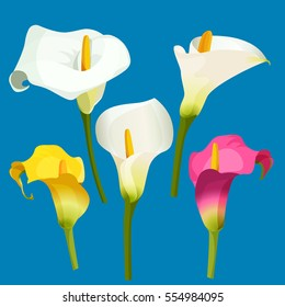 Arum lily realistic vector illustration. Set of calla lily of white, pink and yellow color. Zantedeschia rhizomatous herbaceous perennial plant. Large, showy flowers spathes grown as ornamental plants