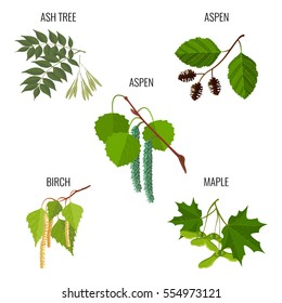 Ash tree leaves, aspen male flowers, green alder, birch buds and maple keys or samara isolated on white background. Realistic detailed vector illustration of greenery foliage set at springtime.