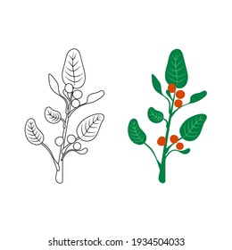 Ashwagandha - Vector illustration, ayurvedic herb, outline black and white and colorful illustrations, simple icons.