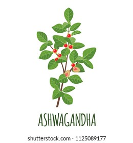 Ashwagandha vector logo in flat style Isolated object. Superfood ashwagandha medical herb. Vector illustration.