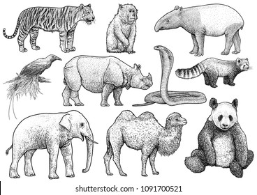 Asian animals collection illustration, drawing, engraving, ink, line art, vector