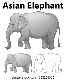 Asian elephant in three sketches illustration