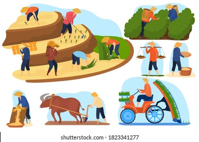 Asian farm rice fields vector illustration set. Cartoon flat farmer people and buffalo animal work on terrace agricultural rice plantations, farming, harvesting. Agriculture in Asia isolated on white