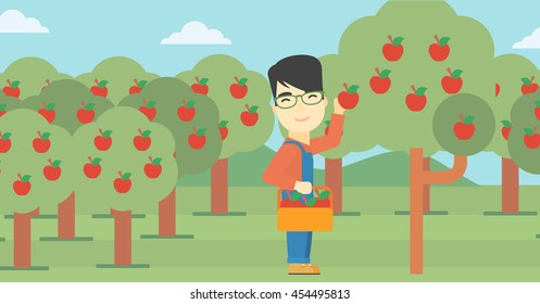 An asian farmer holding a basket and collecting apples in fruit garden. Farmer collecting apples. Vector flat design illustration. Horizontal layout.