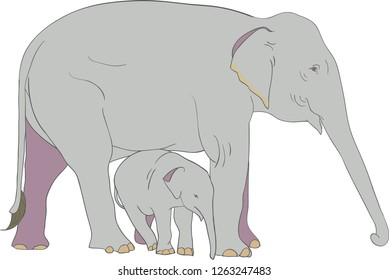 Asian female elephant and her baby vector