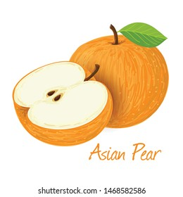Asian Pear, fruit doodle drawings vector illustration.