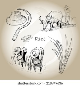 Asian Rice. Hand drawn vector of rice set. Vector illustration. Eps 10.