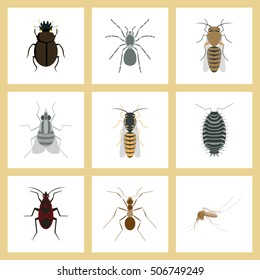assembly flat Illustrations insect wasp soldier bug ant mosquito scarab Araneus bee fly
