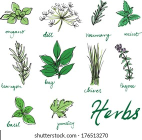 Assorted fresh herbs vector