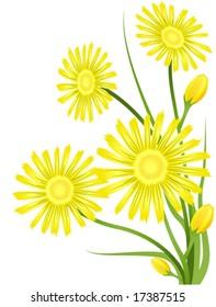Aster Flower - Vector