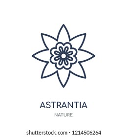 Astrantia icon. Astrantia linear symbol design from Nature collection. Simple outline element vector illustration on white background.