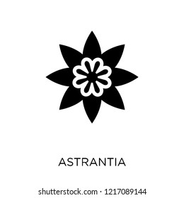 Astrantia icon. Astrantia symbol design from Nature collection. Simple element vector illustration on white background.