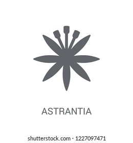 Astrantia icon. Trendy Astrantia logo concept on white background from Nature collection. Suitable for use on web apps, mobile apps and print media.