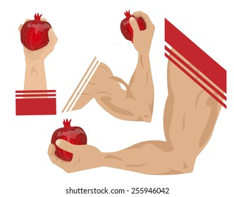 Athletic male hand holding a pomegranate. Vector Illustration.