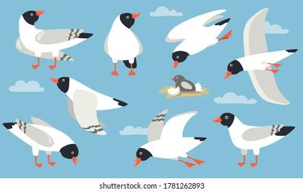Atlantic gull set. Cartoon sea bird flying in sky, hatching, standing, pecking. Cartoon illustration for beach seagull, wildlife, seaside, port concept