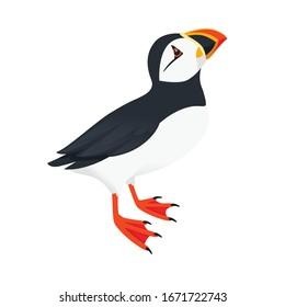 Atlantic puffin bird look at top cartoon animal design flat vector illustration isolated on white background