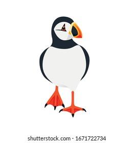Atlantic puffin bird walking cartoon animal design flat vector illustration isolated on white background