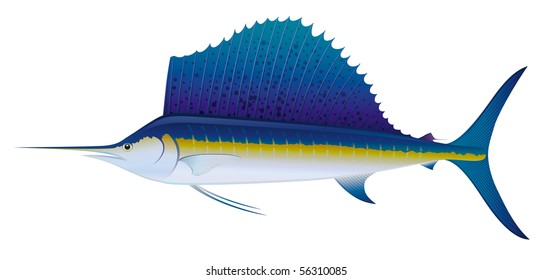 "Atlantic Sailfish (Istiophorus albicans) saltwater fish.  ""Full compatible. Created with gradients."""
