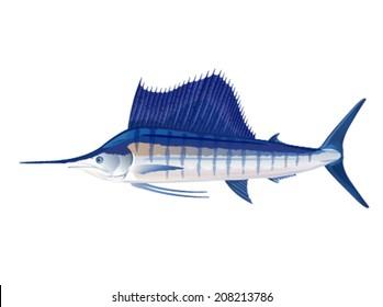 Atlantic sailfish in profile, eps10 illustration make transparent objects, isolated