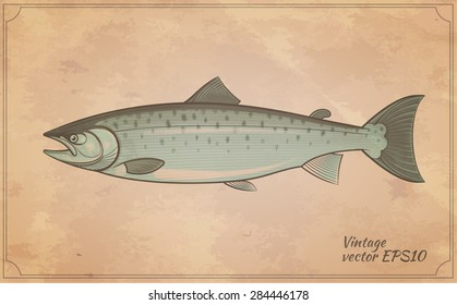 Atlantic salmon fish outline vintage style zoology vector illustration