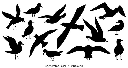 Atlantic seabird, seagulls black silhouette set on white background. Sea, Ocean, Gull, bird in a vector flat style
