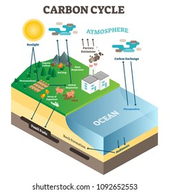 Atmosphere carbon exchange cycle in nature, planet earth ecology science vector illustration diagram scene with ocean, animals, plants and industrial factory. Educational information poster.