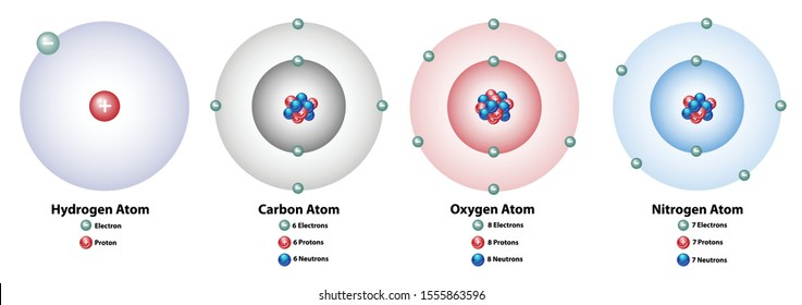 Atomic elements showing the nucleus and shells, numbers of electrons, protons, and neutrons. Hydrogen, carbon, oxygen, and nitrogen.