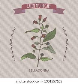 Atropa belladonna aka belladonna or deadly nightshade color sketch. Green apothecary series. Great for traditional medicine, or gardening.