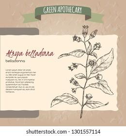 Atropa belladonna aka belladonna or deadly nightshade sketch. Green apothecary series. Great for traditional medicine, or gardening.