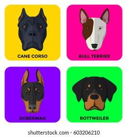 Rottweiler Attack Images, Stock Photos & Vectors | Shutterstock
