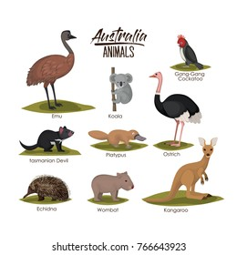 australia animals set in colorful silhouette