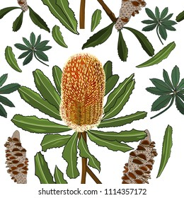 australia native plant, banksia flower seamless pattern on white background