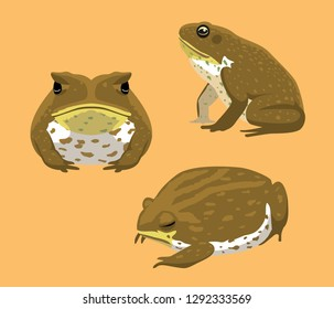 Australian Animal Cane Toad Cartoon Vector Illustration
