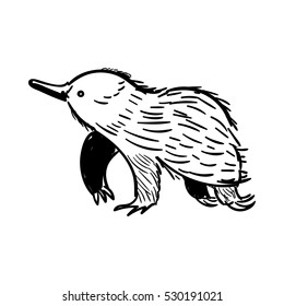 Australian animal Echidna in doodle style. Vector illustration.