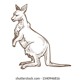Australian animal, kangaroo with pouch and long tail isolated sketch vector. Wildlife or zoo, wallaby pencil drawing, biological species. Australia fauna encyclopedia drawing, jumping mammal