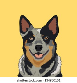 Australian cattle dog, The buddy dog